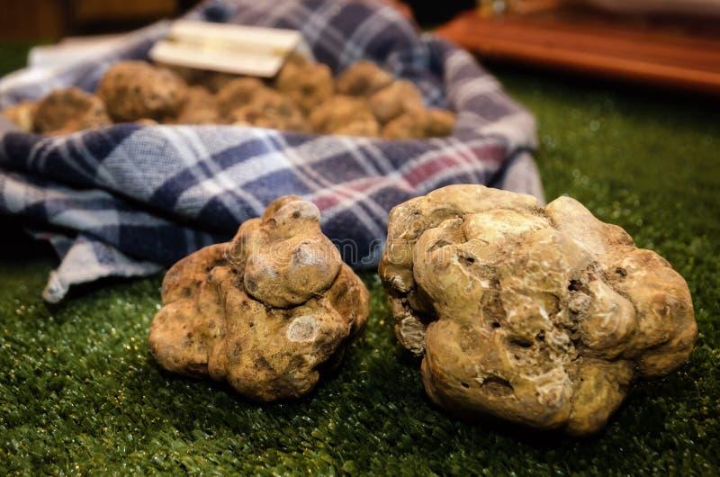 Alba white truffles at the Fiera del Tartufo. White Truffles Tuber Magnatum Pico on a trader stall of the Fiera del Tartufo Truffle Fair of Alba, Piedmont Italy royalty free stock photos