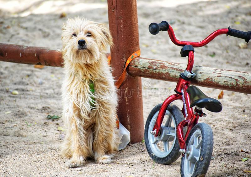 Albacete, Spain, November 3, 2019: Cute little dog tied to a bike waiting at a park to his family. Children playing on playground royalty free stock photos