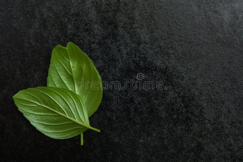 Albahaca en un fondo negro imagenes de archivo