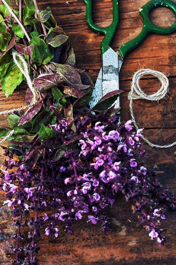 Albahaca floreciente de las especias de los manojos fotos de archivo