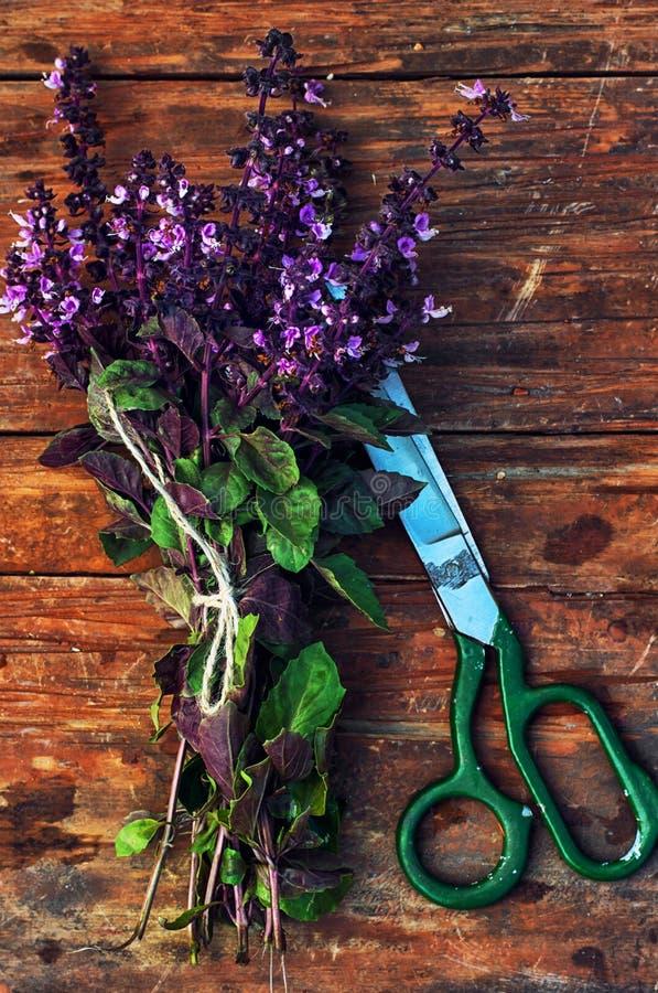 Albahaca floreciente de las especias de los manojos foto de archivo libre de regalías