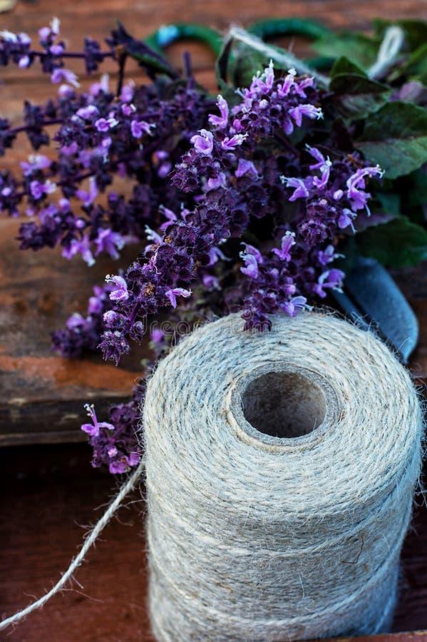 Albahaca floreciente de los manojos fotografía de archivo libre de regalías