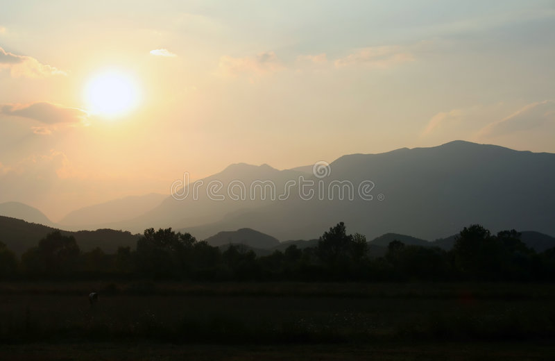 Download Albanian cows on pasture stock image. Image of sunset - 3006761