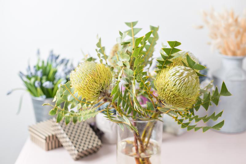 Albany Australia, closeup of Banksia petiolaris flower. Collection of australian native plants. the work of the florist. At a flower shop stock images