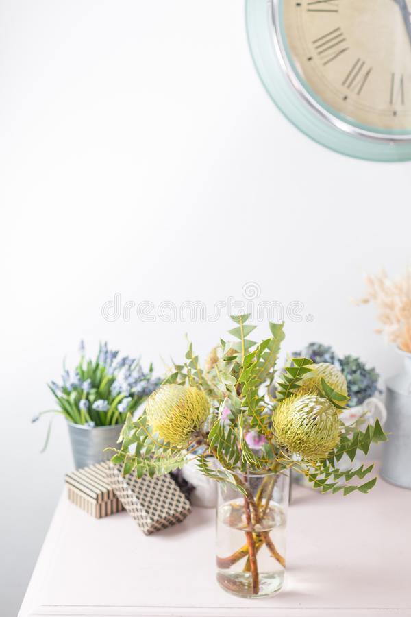 Albany Australia, closeup of Banksia petiolaris flower. Collection of australian native plants. the work of the florist. At a flower shop stock photography