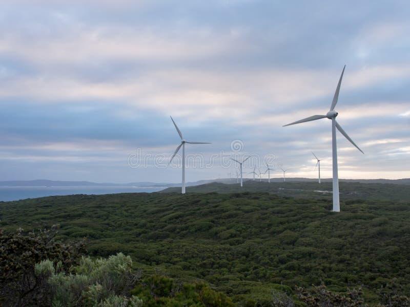 Albany wiatrowy gospodarstwo rolne, zachodnia australia zdjęcie stock