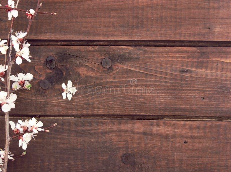 Albaricoque floreciente en fondo de madera rústico Fondo del resorte imagen de archivo libre de regalías
