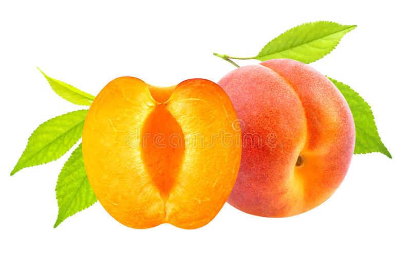 Albaricoques aislados Frutas frescas del albaricoque aisladas en el fondo blanco fotos de archivo libres de regalías