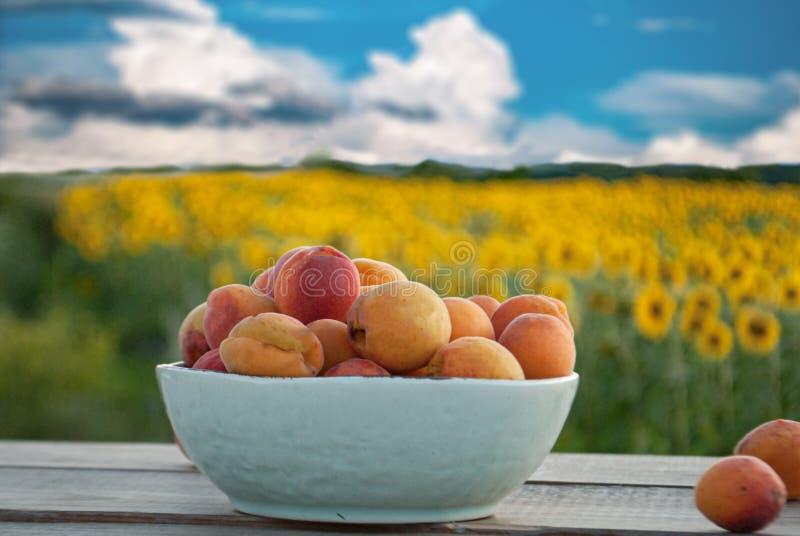 Albaricoques dulces maduros en un cuenco en un fondo hermoso fotografía de archivo libre de regalías
