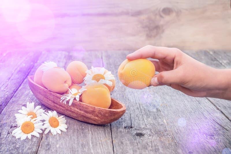 Albaricoques org?nicos maduros en las manos de una muchacha en un fondo de madera chamomiles Copie el espacio imagen de archivo