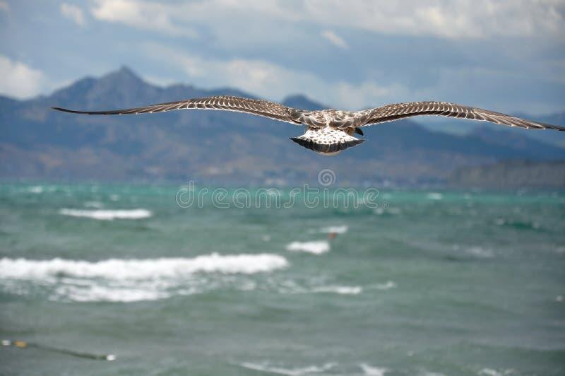 Albatro che vola fuori al mare su un fondo delle montagne immagine stock immagine di cielo - Sopra un mare di specchi si vola ...