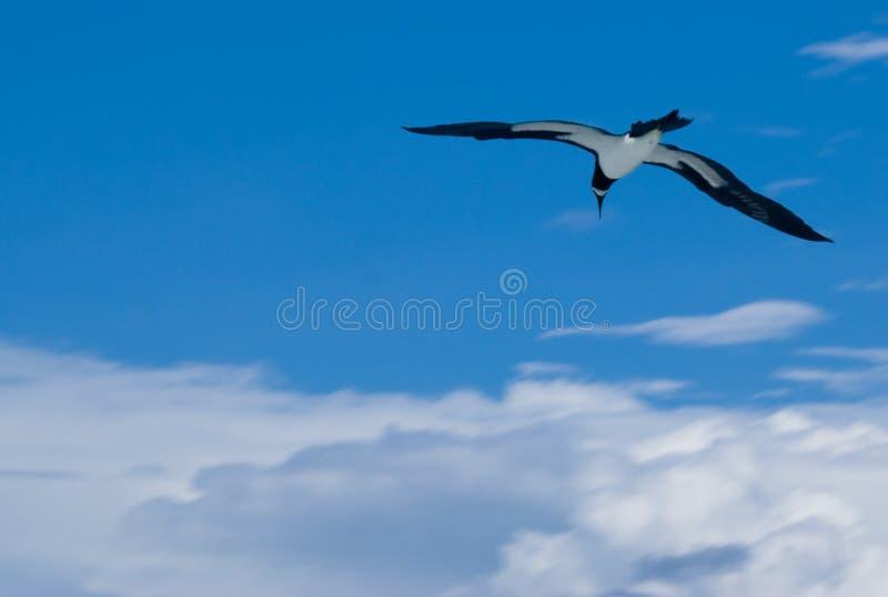 Albatro fluttuato fotografie stock libere da diritti