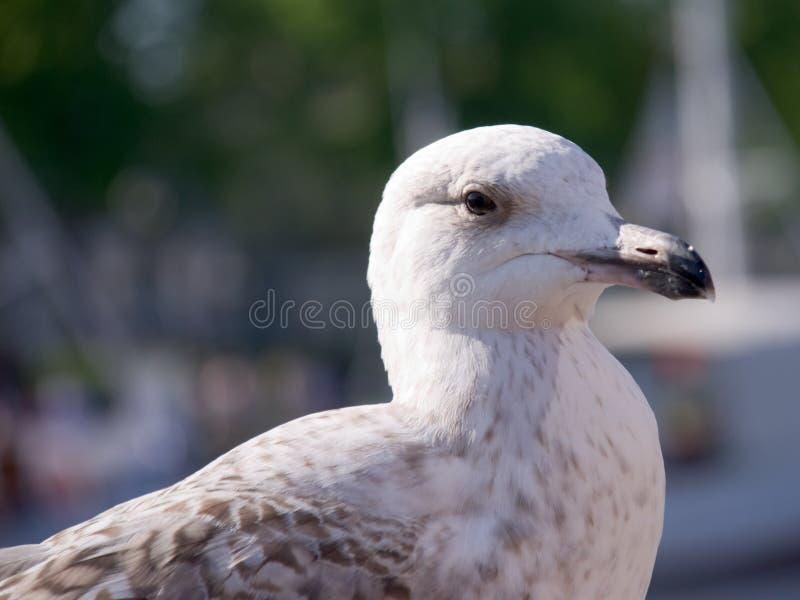 Albatros imágenes de archivo libres de regalías