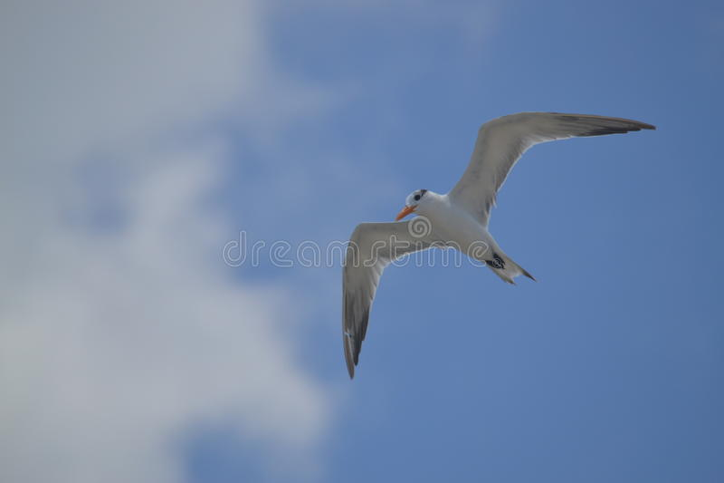 Albatros Birds Fauna Tropical Yucatan Exotic Mexic Stock Photo