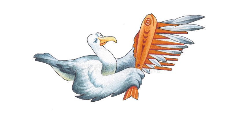 Albatross. The albatross has the considerable quantity wing-feathers vector illustration