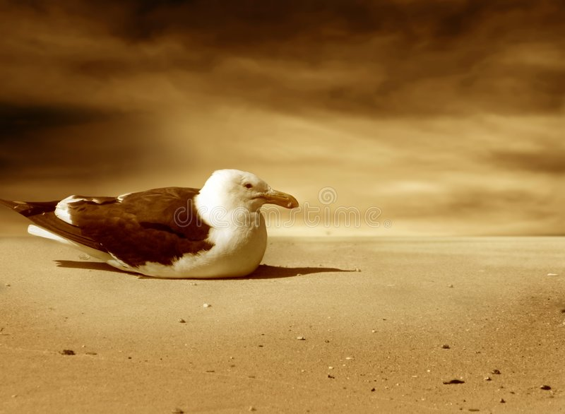 Download Albatross stock photo. Image of down, seppia, nature, wings - 7591232
