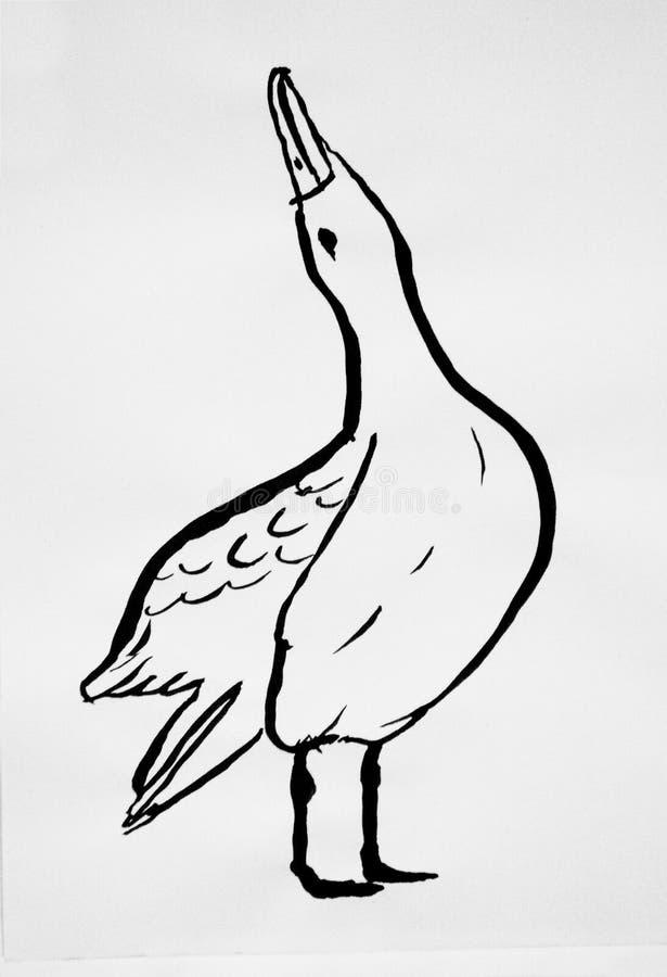 Albatross drawing illustration on white. Monochrome vector illustration