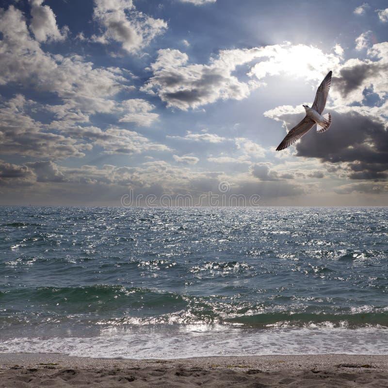 Download Albatross E Mar Do Cararibe Imagem de Stock - Imagem de serene, atmosfera: 26512295