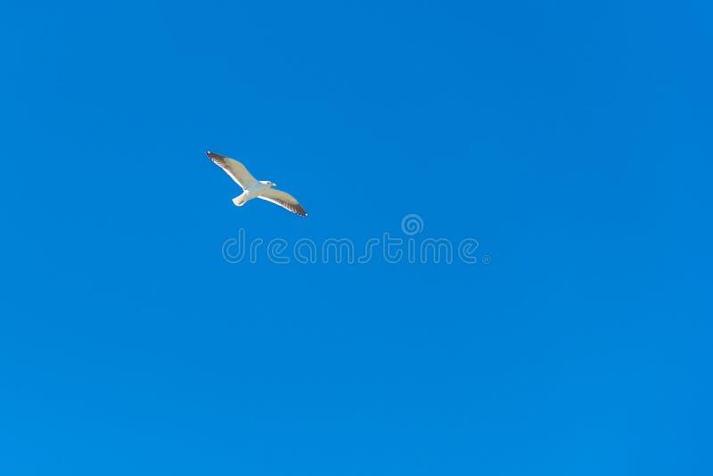 Download Albatross Flying Stock Photo - Image: 35512060