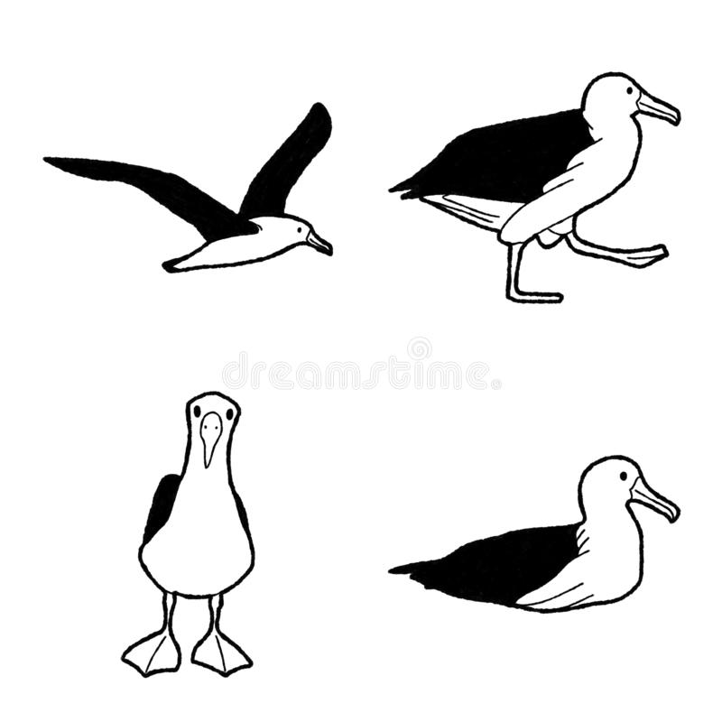 Albatross Vector Illustration Hand Drawn Animal Cartoon Art. Albatross Vector Pencil Illustration Hand Drawn Animal Cartoon Art stock illustration