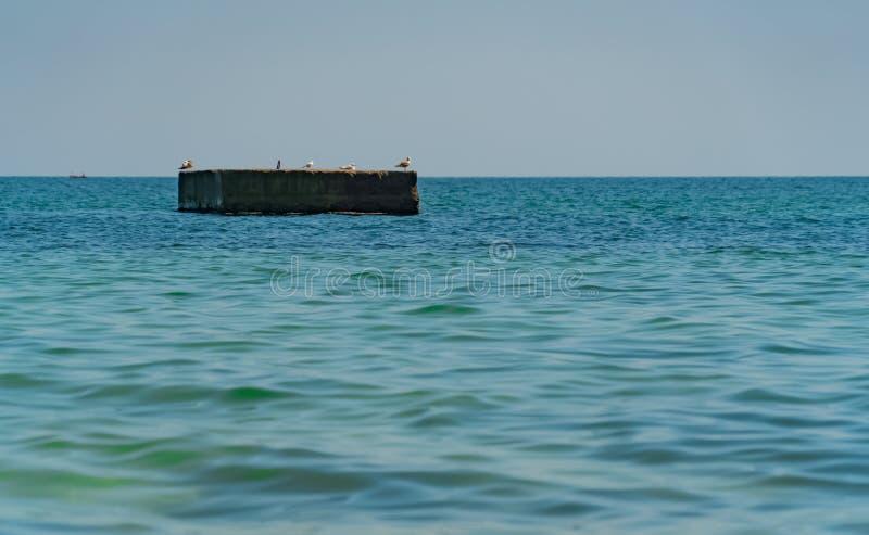 Albatroszeemeeuw op de overzeese pijler achtergrondaard, oceaan, pijler, toevlucht, overzees, stock afbeelding
