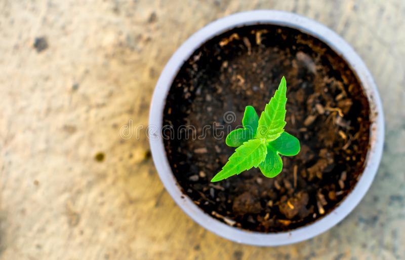 Alberello che cresce in una cura della terra della natura di verde del suolo della tazza immagine stock libera da diritti
