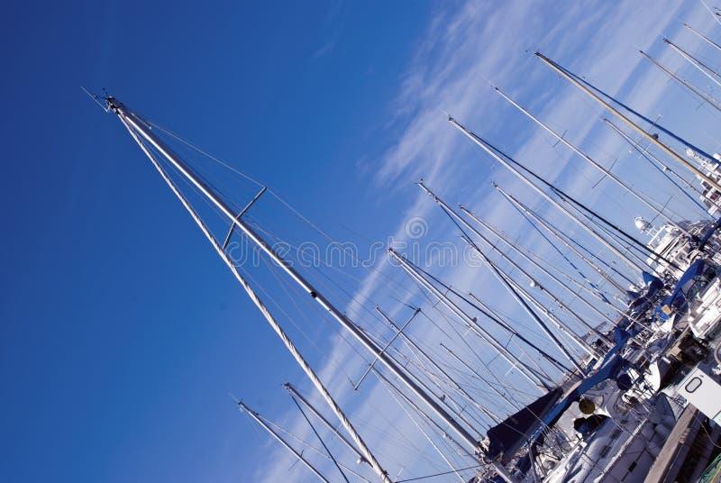 Download Alberi immagine stock. Immagine di canottaggio, porto - 7304117