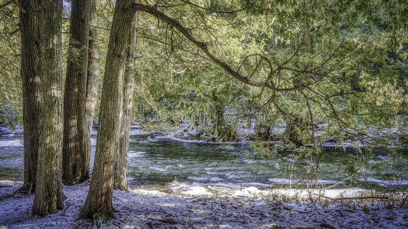 Alberi accanto ad una corrente nell'inverno fotografie stock