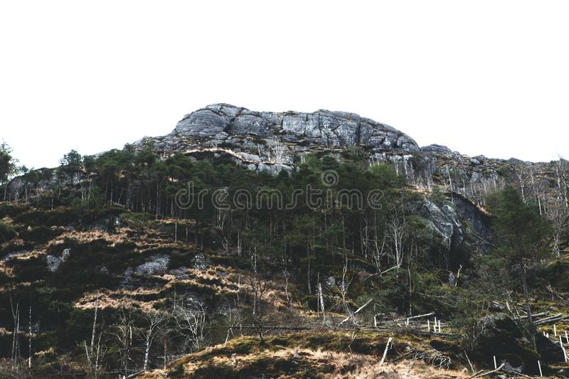 Alberi alla cima della montagna fotografia stock libera da diritti