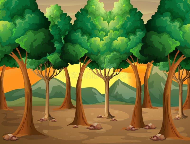 Alberi alla foresta illustrazione vettoriale