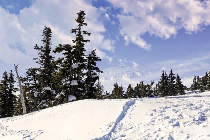 Alberi alpini di inverno con la traccia blu della neve immagini stock