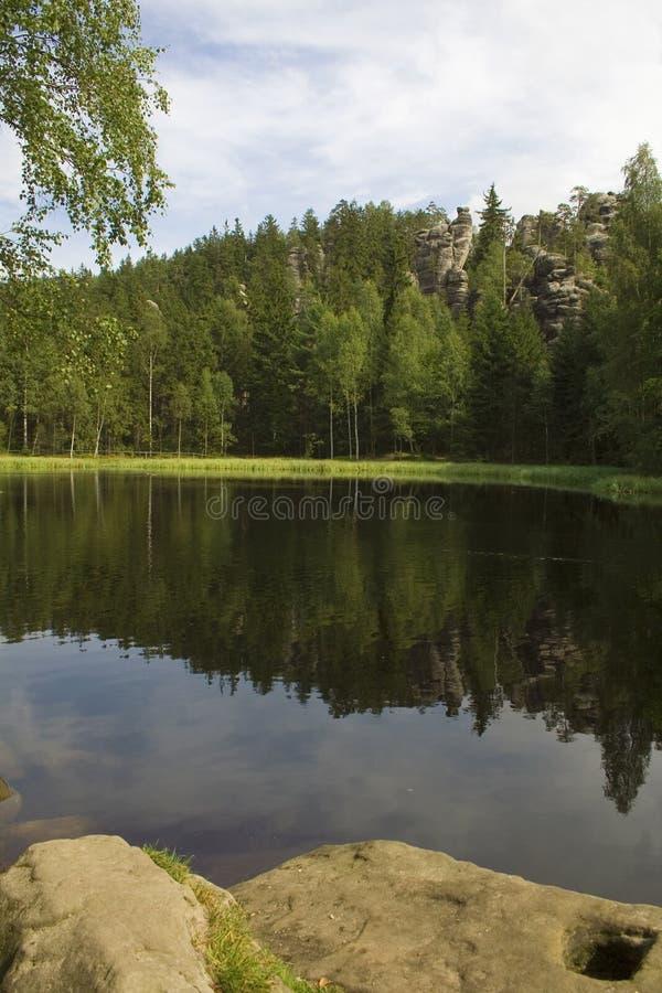 Alberi alti dal lago calmo fotografia stock