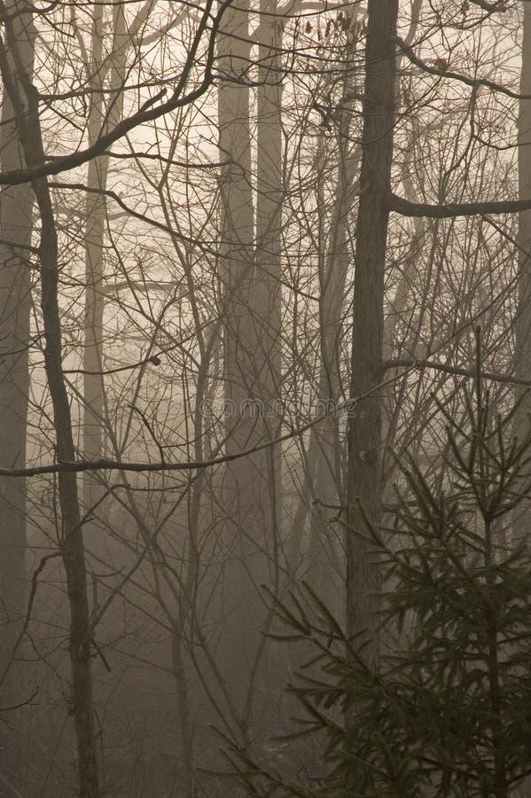 Download Alberi & nebbia immagine stock. Immagine di hardwood - 217023
