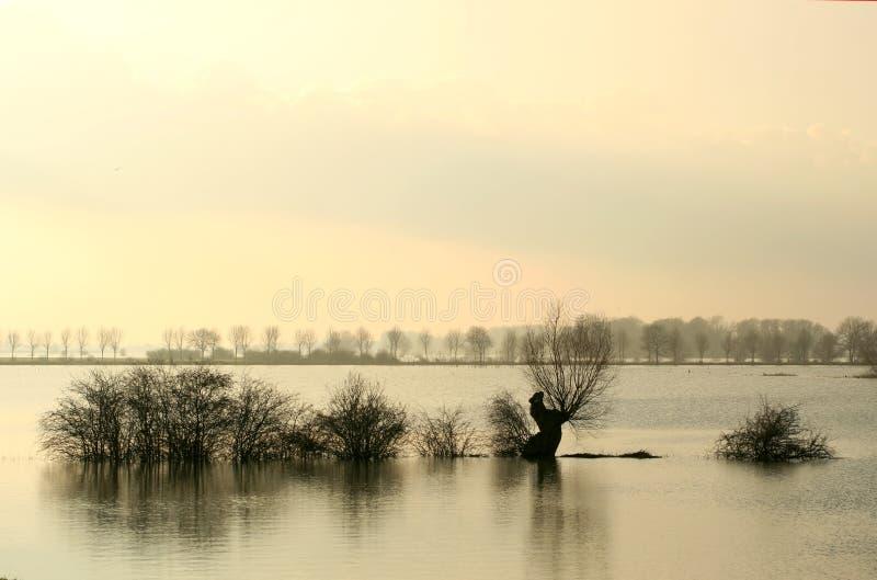 Alberi annegati in avampaesi olandesi immagini stock