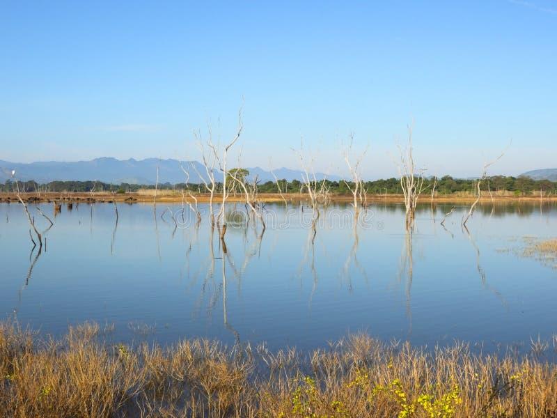 Alberi annegati a udawalawe fotografie stock libere da diritti