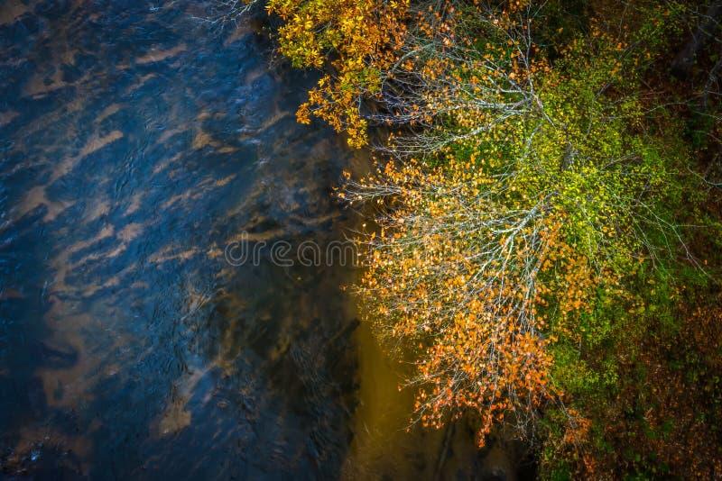 Alberi astratti di autunno aerei vicino al fiume immagine stock