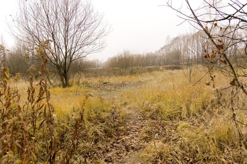 Alberi in Autumn Park fotografia stock libera da diritti