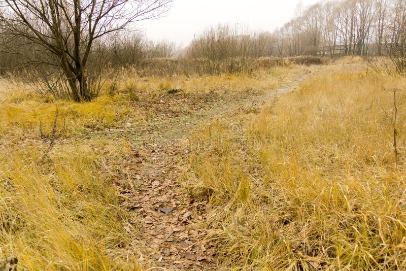 Alberi in Autumn Park immagine stock