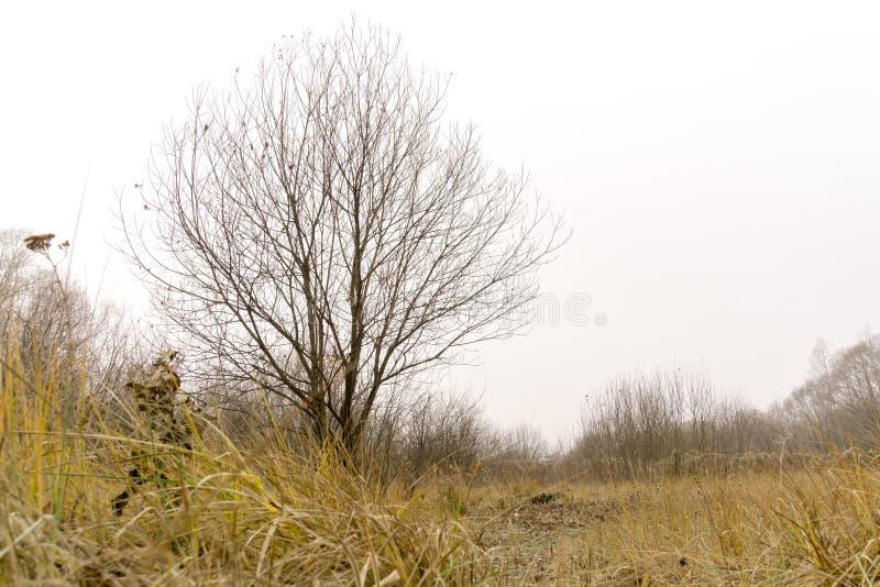 Alberi in Autumn Park immagini stock