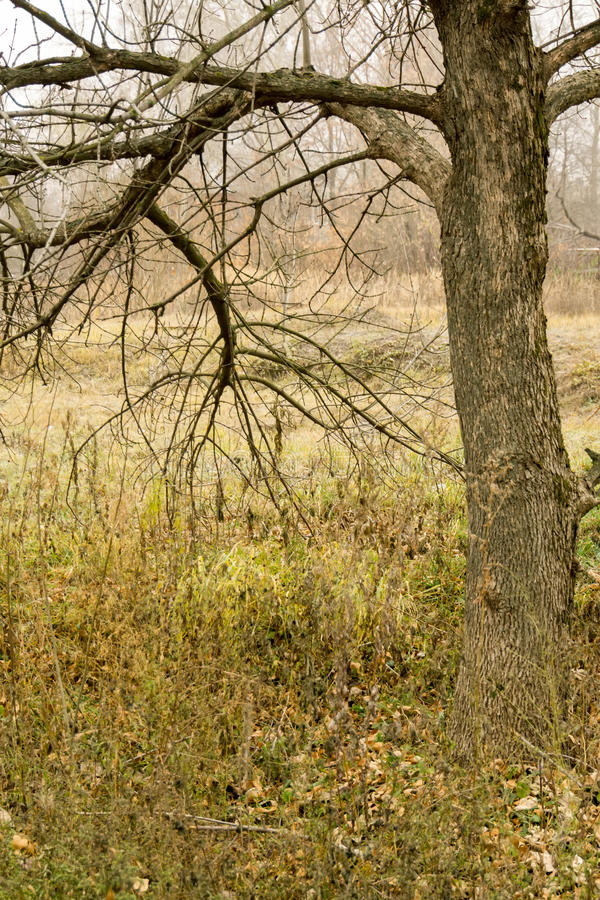 Alberi in Autumn Park fotografie stock
