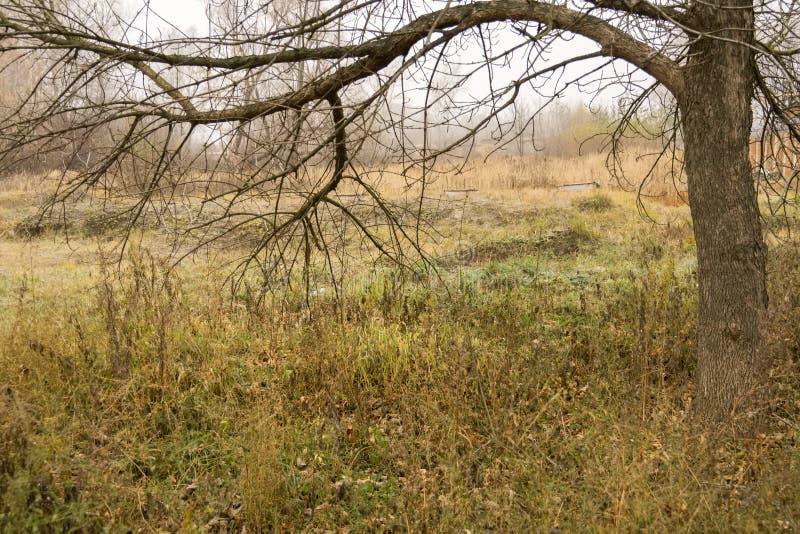 Alberi in Autumn Park immagine stock libera da diritti