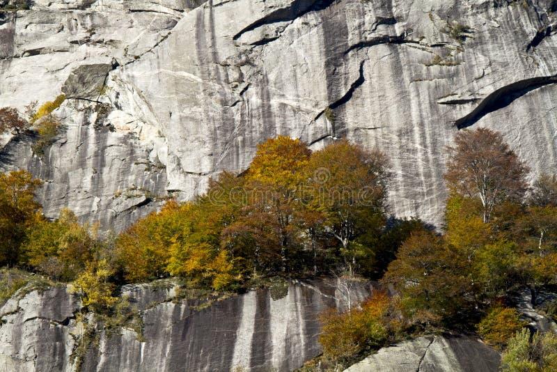 Alberi in autunno immagini stock libere da diritti