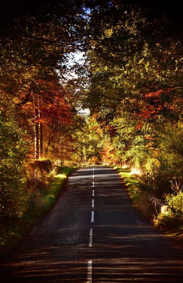 Alberi in autunno fotografie stock