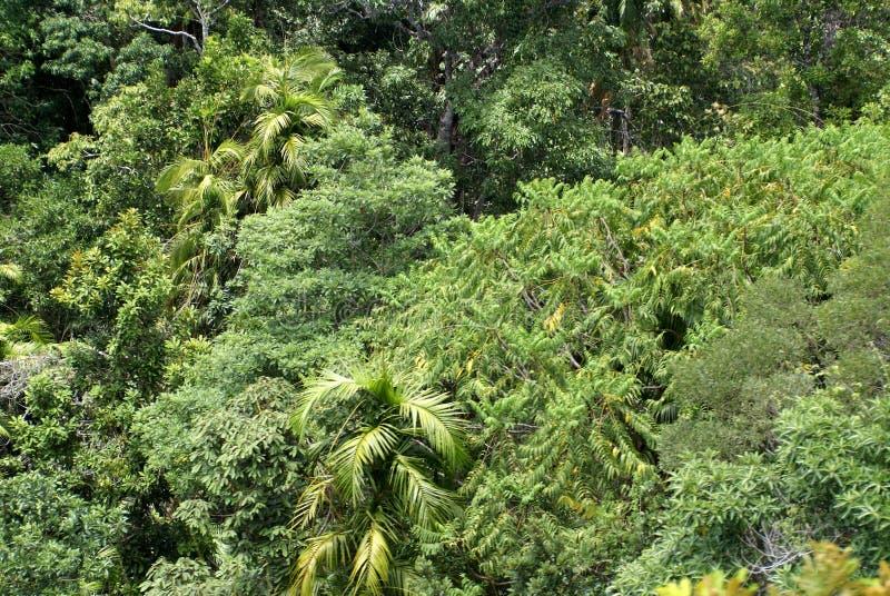 Alberi in Barron Gorge National Park immagine stock libera da diritti