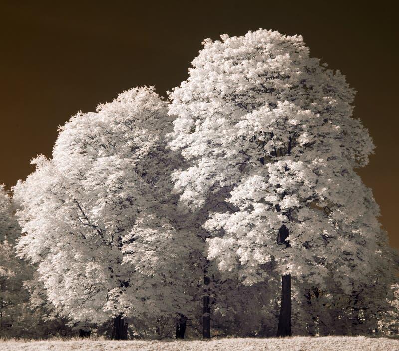 alberi bianchi immagine stock immagine di legno poznan