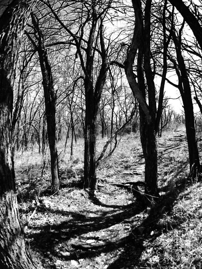 Alberi in bianco e nero immagine stock