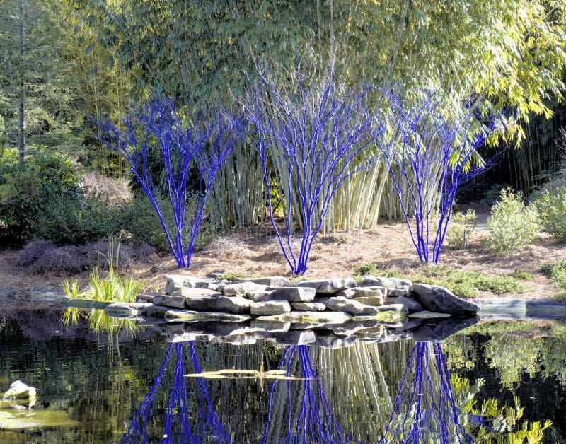 Alberi blu con le riflessioni dell'acqua immagine stock