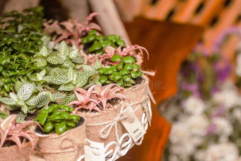 Alberi in borse come regali di nozze immagini stock libere da diritti