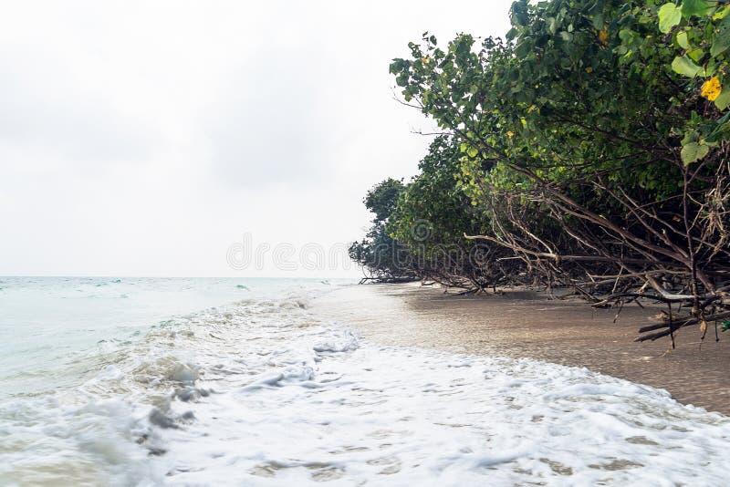 alberi caduti alla spiaggia dell'elefante, Havelock fotografie stock libere da diritti