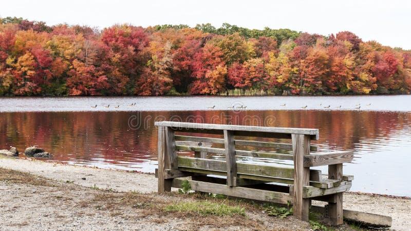 Alberi che cambiano colore in autunno immagine stock libera da diritti